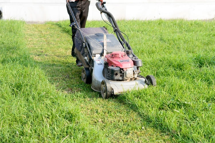 How much does it cost to start a lawn care business