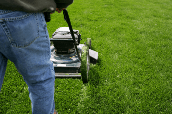 How to start a lawn care business with no money